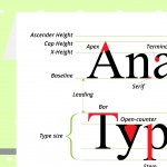 The Anatomy of Typography Infographic
